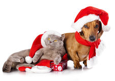 Dog and  cat wearing a santa hat Royalty Free Stock Photos