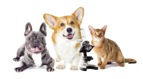 Dog and cat. On a white background Stock Photo