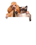 Dog and cat. Royalty Free Stock Images