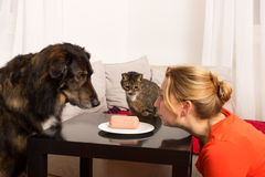 Dog cat woman. A woman sitting with a dog and a cat in front of a plate with sausage Stock Image