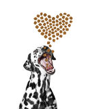 Dog catches the dry food in the form of hearts falling from abov Stock Image