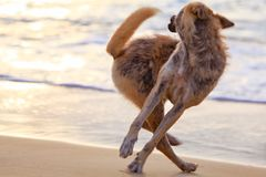 The dog catches its own tail. royalty free stock images