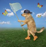 Dog catches yellow butterfly 2