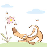 Dog catching bees. Dog with large ears catching bees Royalty Free Stock Images