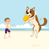 Dog Catching Flying Disk. Boy playing with dog catching flying disk on the beach Stock Photo