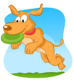 Dog catching frisbee. Dog jumping and catching green frisbee Stock Images