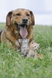 Dog an cats Royalty Free Stock Images