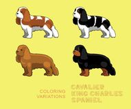 Dog Cavalier King Charles Spaniel Coloring Variations Vector Illustration Stock Photography