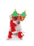 Dog celebrates Christmas. Pet dog in the spirit celebrates Christmas during the holiday season.  White background Stock Images