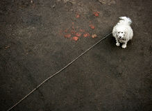 Dog in chain Stock Photos