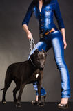 Dog on a chain that keeps a woman. In denim clothes Royalty Free Stock Images