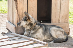 Dog on the chain rests in the shade of the kennel. Royalty Free Stock Photography