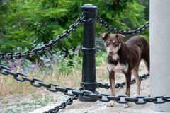 A dog between the chains Royalty Free Stock Images