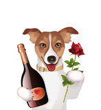 Dog with champagne and rose Royalty Free Stock Photography