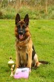 Dog champion Stock Photography