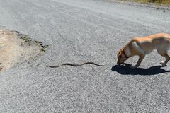 Dog Chases Snake Stock Photos