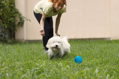 Dog chasing the ball Royalty Free Stock Photos