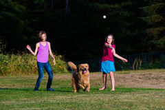 Dog chasing ball. A golden retriever dog chasing a ball being thrown by a child royalty free stock image
