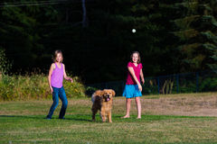 Dog chasing ball. A golden retriever chasing a ball being thrown by a child Stock Image