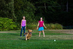 Dog chasing ball Stock Photo