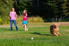 Dog chasing ball. A golden retriever dog chasing a ball thrown by children royalty free stock photography