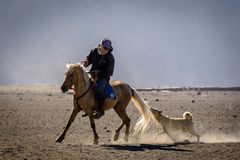 A dog chasing a horse and its rider royalty free stock image