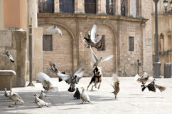 Dog is chasing pigeons in the square Stock Images