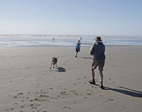Dog chasing running girl on ocean beach at olympic Stock Photos