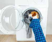 A dog in a checkered blue shirt is standing near the washing machine. Laundry and dry cleaning pet service. Funny ad for your business Royalty Free Stock Photo