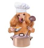 Dog chef Stock Photos
