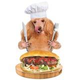 Dog chef Royalty Free Stock Image