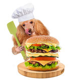 Dog chef Royalty Free Stock Photo