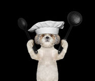 Dog chef is going to prepare meals Royalty Free Stock Image