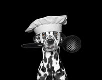 Dog chef holding a spoon in his mouth Stock Photography