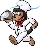 Dog Chef Running Stock Photography