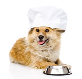 Dog in chefs hat begging for food. looking at came Stock Images