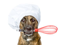 Dog in chef's hat holding a wire whisk in mouth. isolated. On white Stock Photos