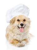 Dog in chefs hat looking at camera. Royalty Free Stock Images