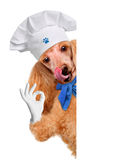 Dog chef Royalty Free Stock Photos