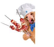 Dog chef Stock Photography