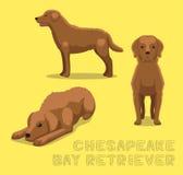 Dog Chesapeake Bay Retriever Cartoon Vector Illustration Stock Image