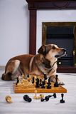 Dog and chess against a fireplace. Royalty Free Stock Photo