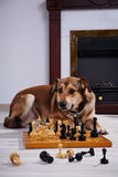 Dog and chess against a fireplace. Stock Image