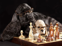 Dog and chess Royalty Free Stock Photography