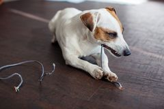 Dog chewed the wires Royalty Free Stock Photos