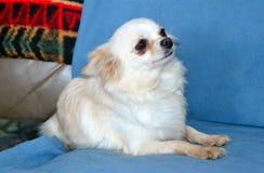 Dog003 Royalty Free Stock Photo