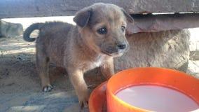 Dog child Stock Images