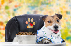 Dog on child chair with paw sign eating dry food (colorful background). Dog wearing baby bib eating food Stock Photography