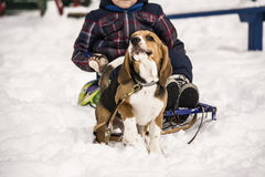 Dog and child in the snow Stock Image