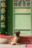 Dog in china Stock Photos